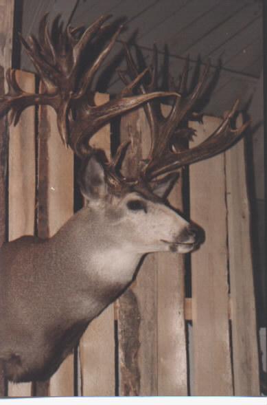 Duck Hunting Boats For Sale >> Hanson Buck vs Broder Buck - best deer hunting trophy