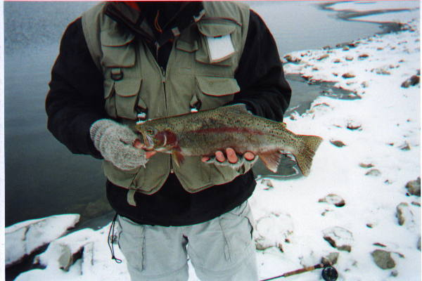 rainbow trout at Blood Indian Reservoir Alberta