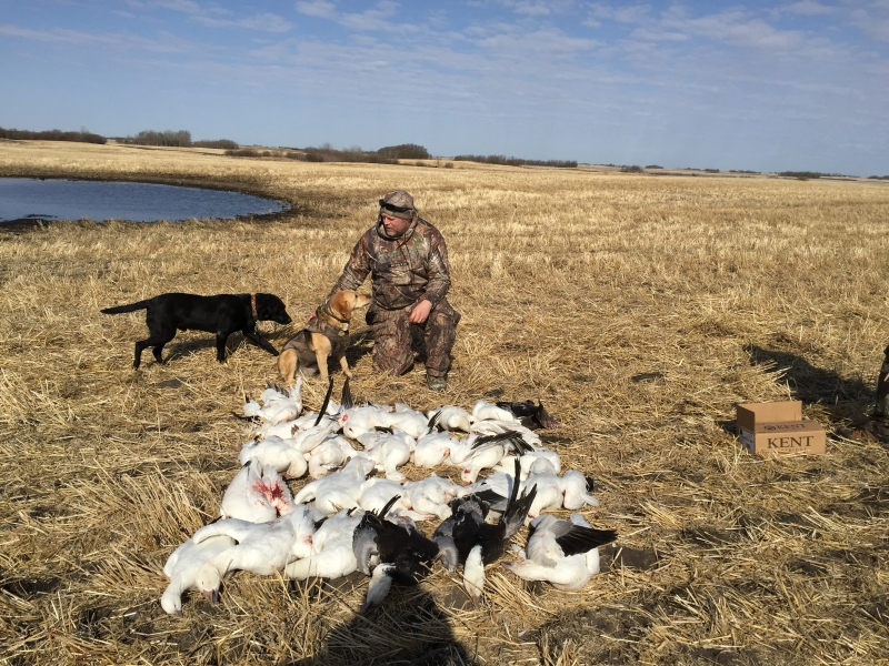 Used layout blinds goose blinds field goose blinds