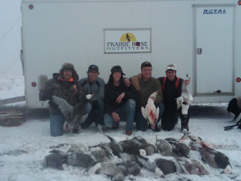 Late October snow geese