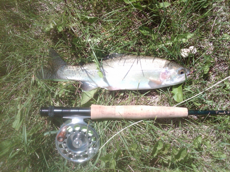 First trout of summer 2012