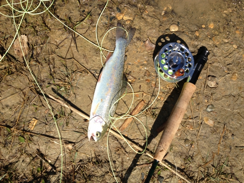2013 first Rainbow Trout