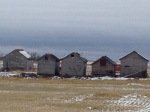 Old Buildings and Snow Geese Landing